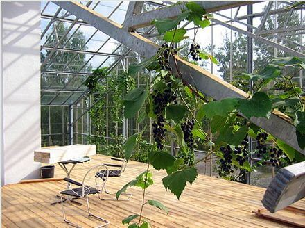 Charmant Living In A Greenhouse Like Dome | @meccinteriors | Design Bites