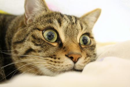 bikkuri-cat