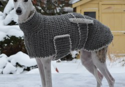 Easy Tips for Crochet Greyhound Sweater Pattern Six Times Greyhounds Wore Sweaters Better Than You Knithacker