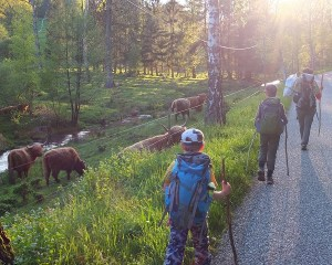50km family hike in the Northern Vosges Regional Nature Park, France
