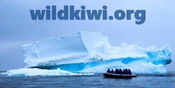 wildkiwi.org