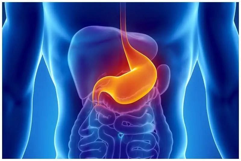 O que é Endoscopia Digestiva Alta
