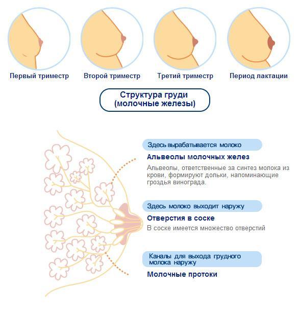 Inverterade Bröstvårtor