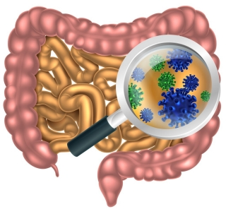 Image result for gut flora research