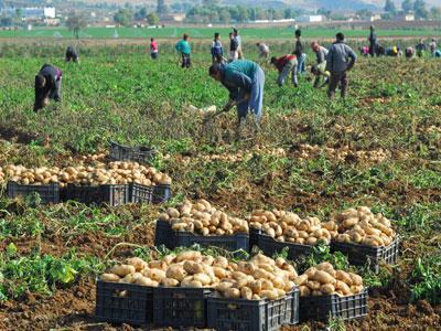 https://i2.wp.com/medafricatimes.com/wp-content/uploads/2013/11/algeria-agriculture.jpg
