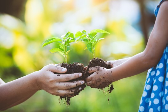 Child little girl and parent holding young plant in hands together