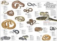 Various venomous snakes