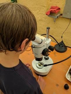 foto microscopio