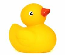 ducks-452485_1920.jpg