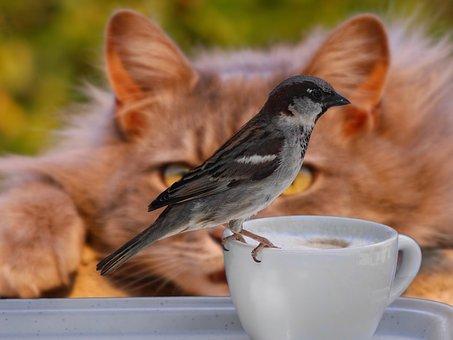 sparrow-2615761__340