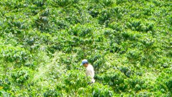 Visiting a Coffee Farm in Colombia