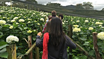 An Interactive Flower Tour with Casa de Colombia and Entre Flores