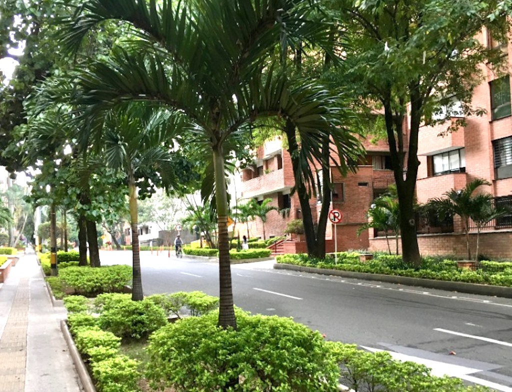 Tree-lined street in Laureles