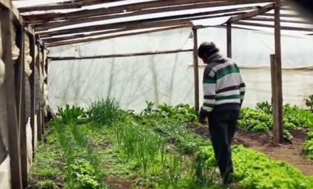 Bitcoin-Liberating-Organic-Farmers