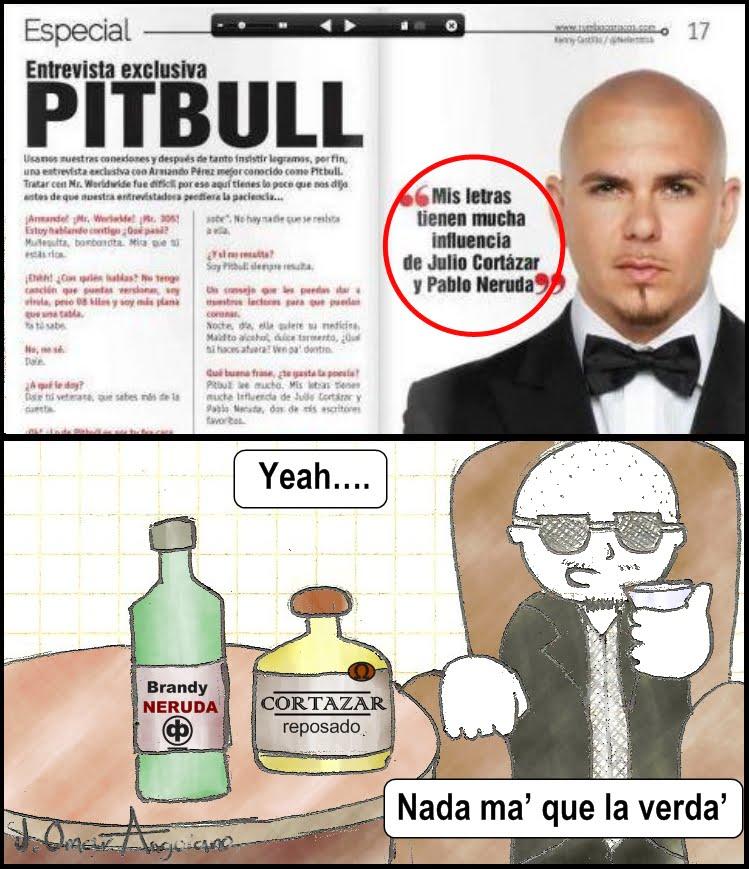 pit bull 004