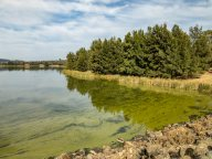 Welcome to Canberra's Lake Ginninderra. Known for the Green Machine and the green dream.