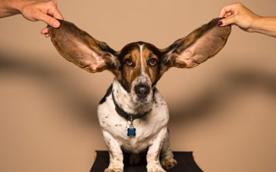 Approach to the patient with Hearing Loss