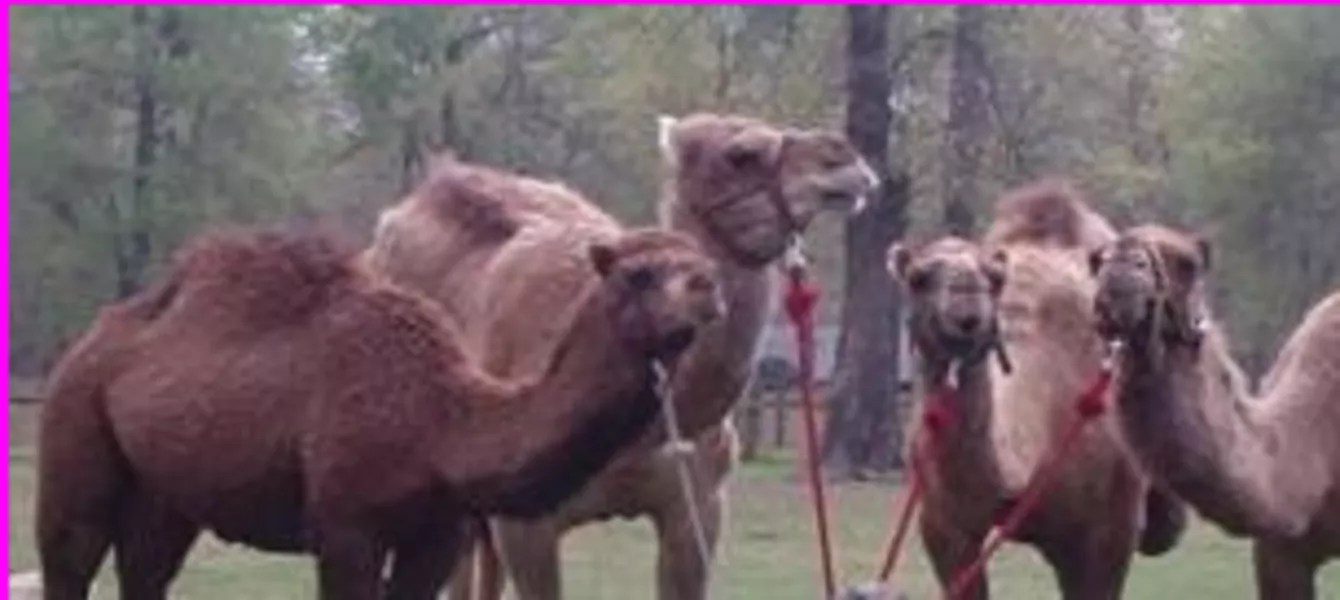 Kim Finley S Animal Parties Petting Zoo Houston Tx The Bash