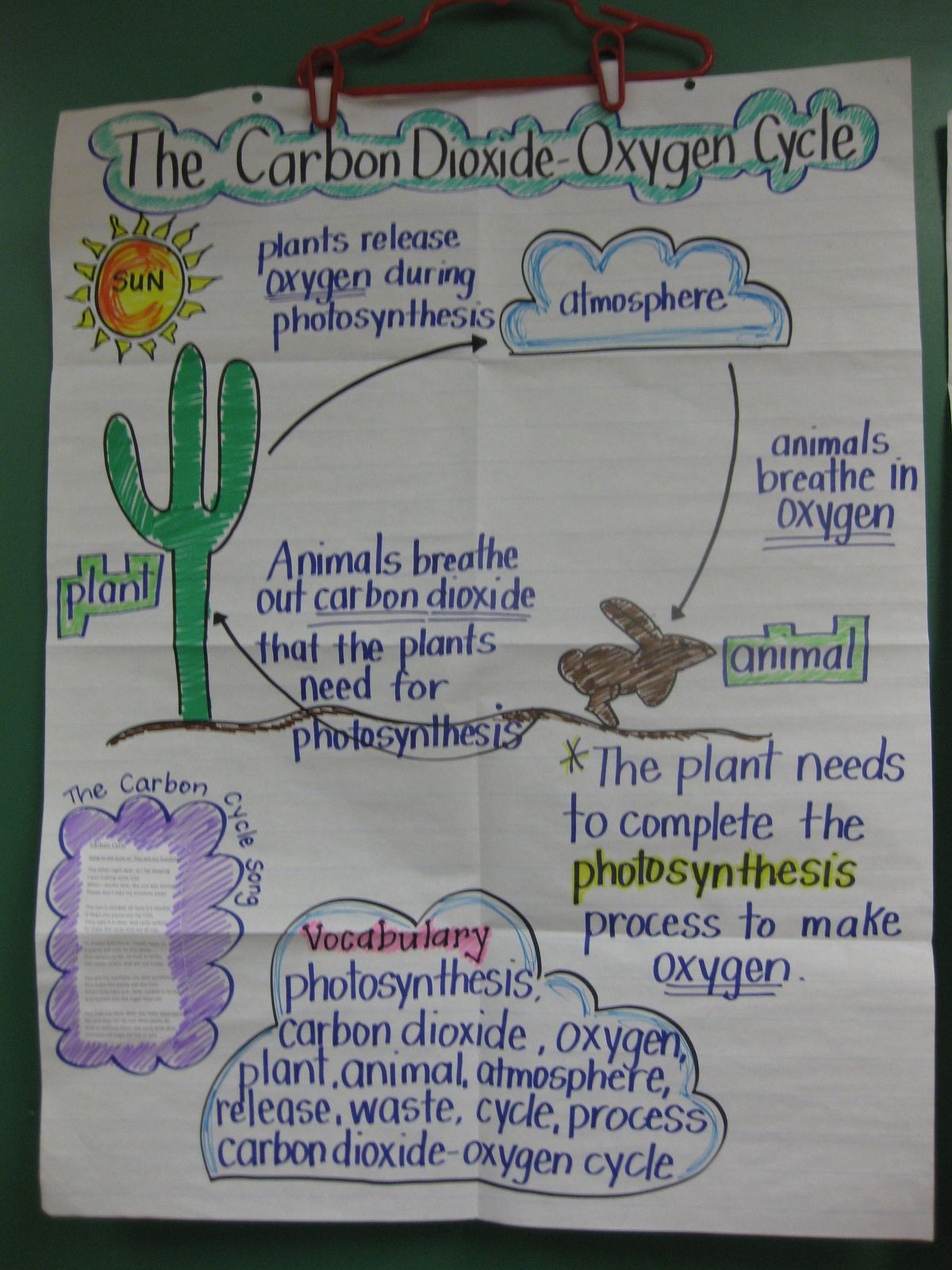 Images About Carbon Cycle