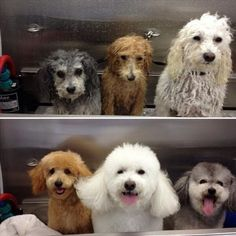 Wet Dogs to Happy Dogs