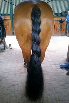 Horse Braiding On Pinterest Horse Tail Braids And Horse