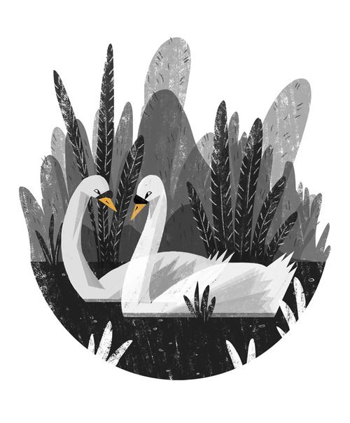 Ella Bailey Illustration. Swans.