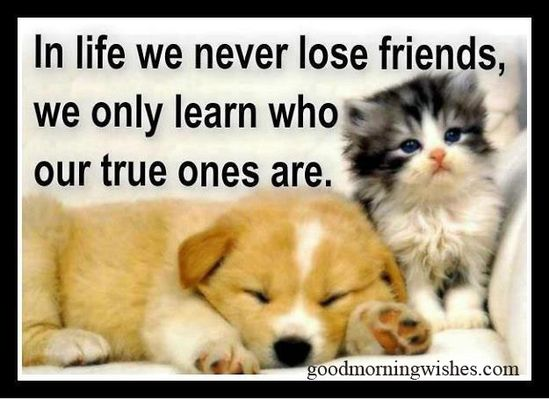 nice sayings to friends | Nice Quotes About Friends And Life
