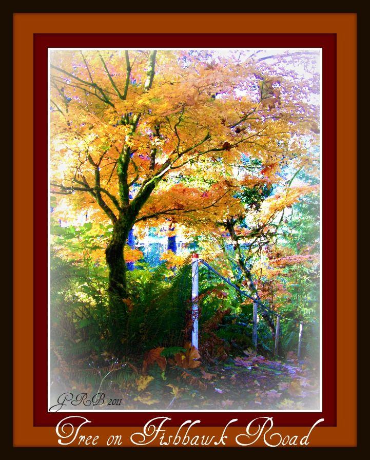 Fall trees at Fishhawk Lake Gayle Rich-Boxman 2011   www.lakehomesatfishhawk.com