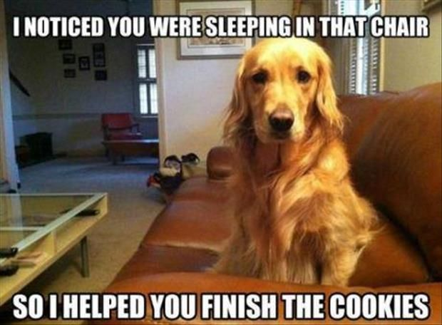 funny dog ate my cookie