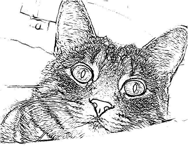 cat coloring pages pinterest