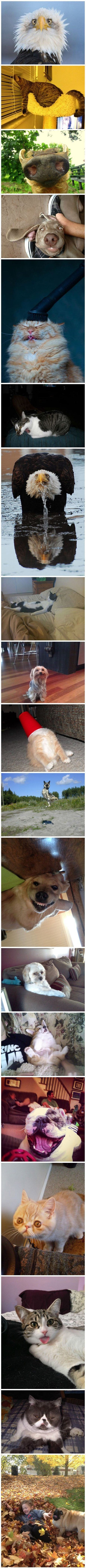 This is absolutely hilarious!!! Animals doing funny things!!! my sister could not stop laughing!!!
