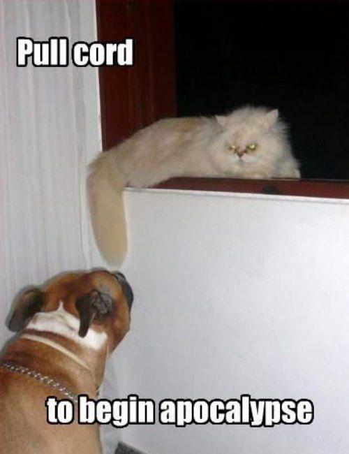 No, Puppy!  She will CUT.YOU.