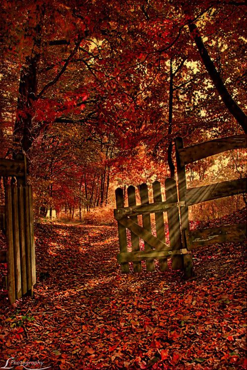 Forest Gate, Herbst, Germany photo via ponder