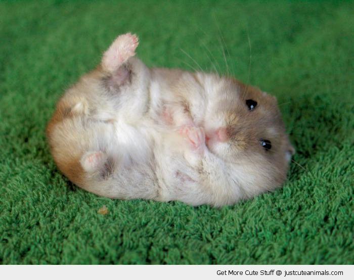 Cute Animals - Google Search