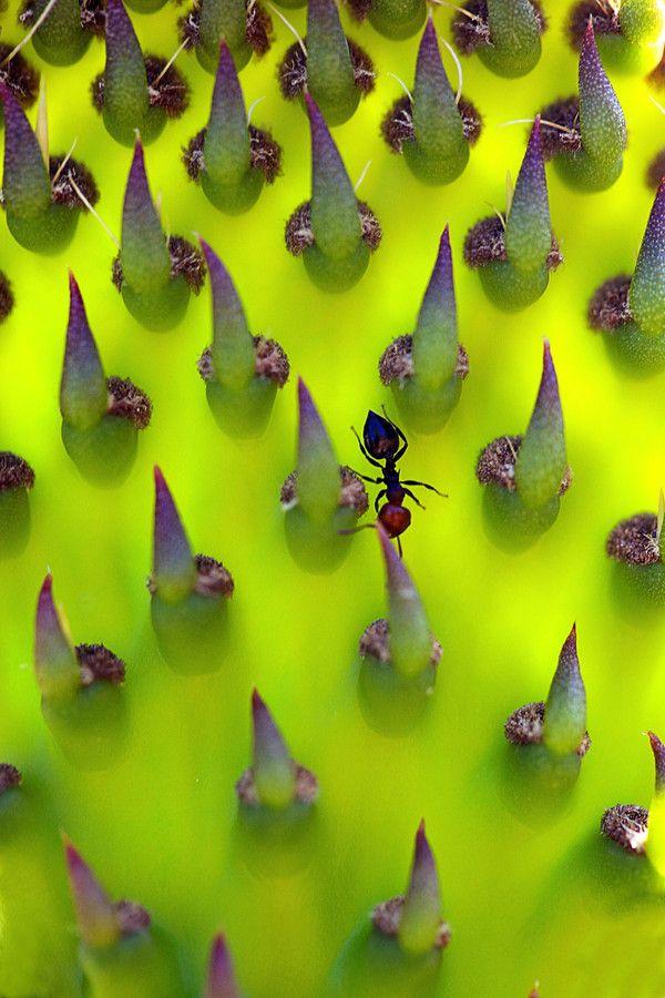 ღღ Awesome shot!!  ~~~ Cactus  by Juan Antonio Capó Alonso