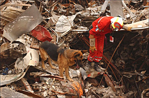 Image result for From September 11 Rescue Dogs