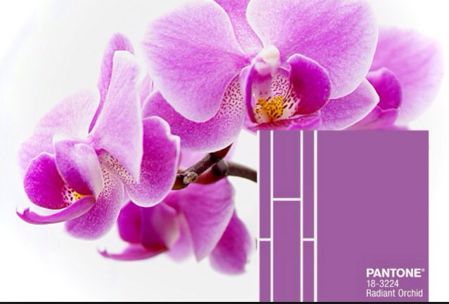 #Radiant-orchid-color