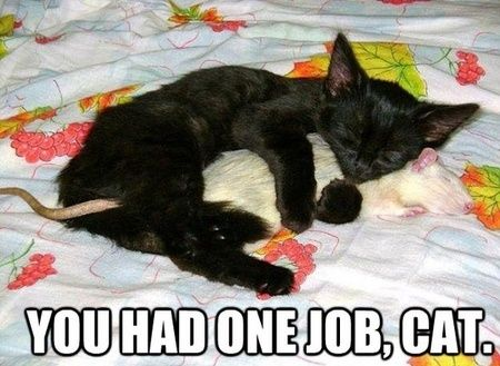 You had one job, cat!  Well, you did say catch it, you didn't say what to do with it.....