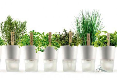 Self watering pots - Eva Solo