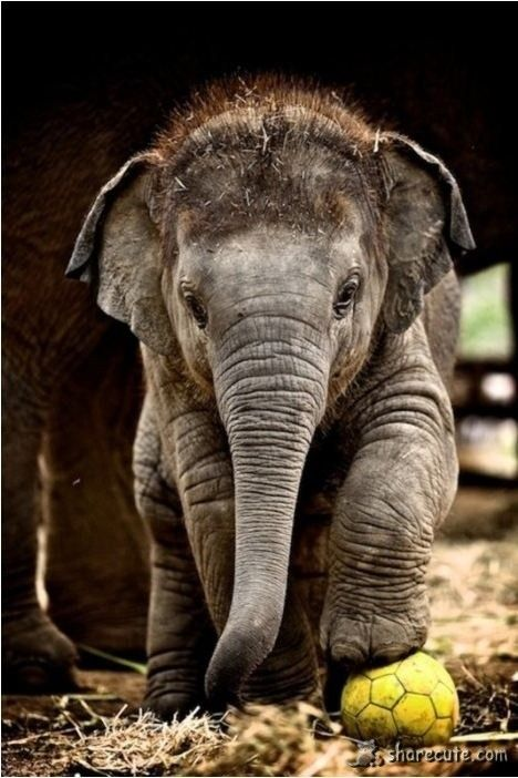 Baby elephant is so cute hope you like it like I do so cute!