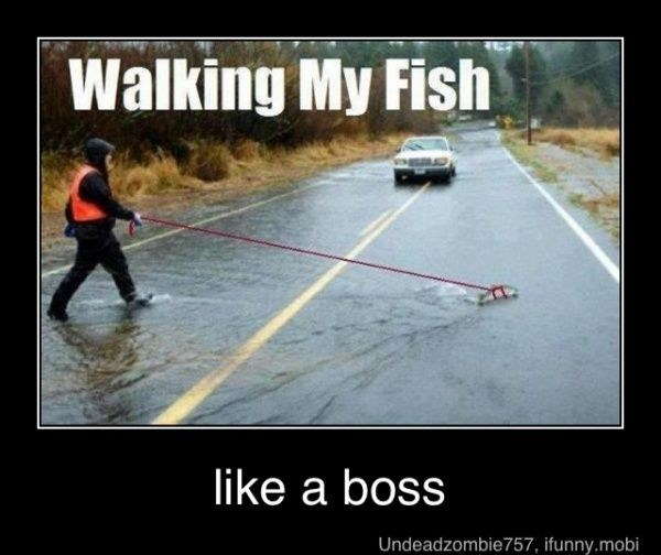 Walking my fish.