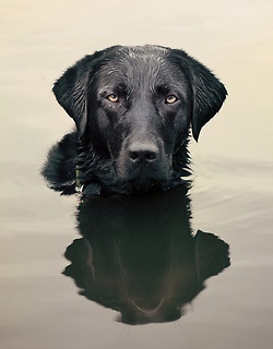 "ihavelotsofdogs: "" and he sits in the lake…. by Julie Hawkes on Flickr. """