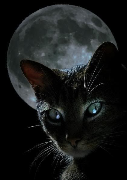Full Moon Black Cat