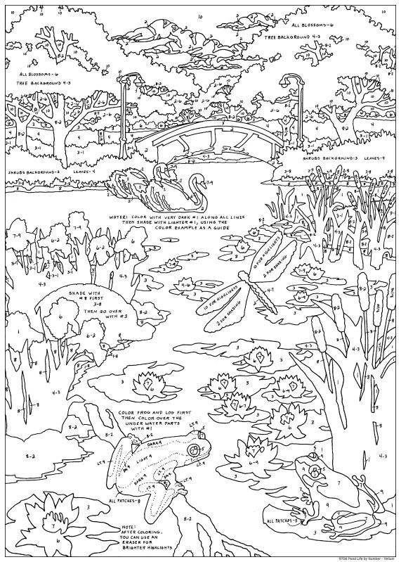 pond life coloring pages pond life color by number stuff2color