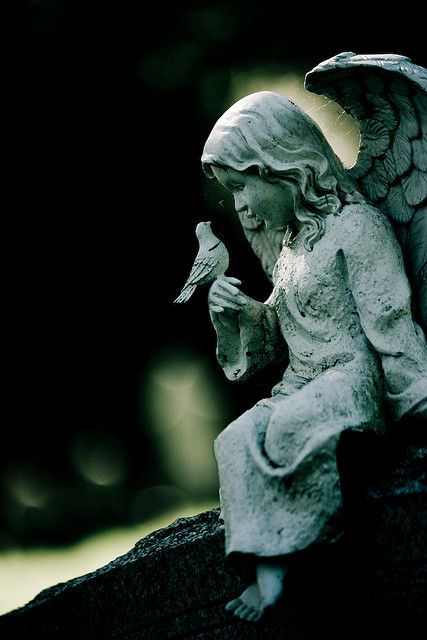 'Bird Whisperer' -- taken in Mount Auburn Cemetery, Cambridge, MA