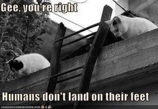 Mean cats