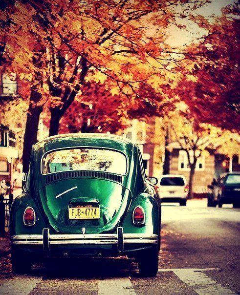 #fall #autumn #herbst