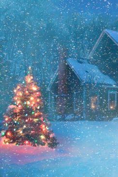 kerstboombuiten.jpg