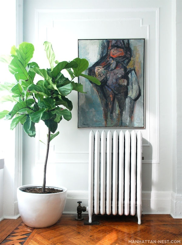 As a kid I thought it was strange how mum had trees indoors, but i want a fiddle leaf fig tree myself these days!