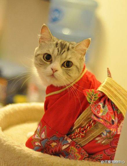 vetement-traditionnel-japonais-kimono